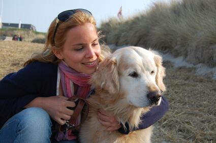 Bei einer Hundebetreuung erfährt ein  Golden Retriever viel Fürsorge.